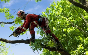 find trusted rated Chadwell Heath tree surgeons in Barking Dagenham