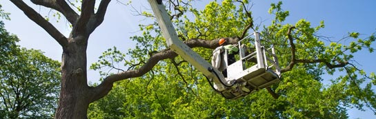 Chadwell Heath tree surgery services