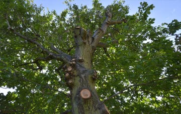 what is Chadwell Heath tree surgery?